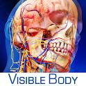 人体解剖学图谱(含数据包)